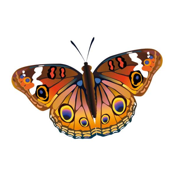 Bügelbild Schmetterling 1