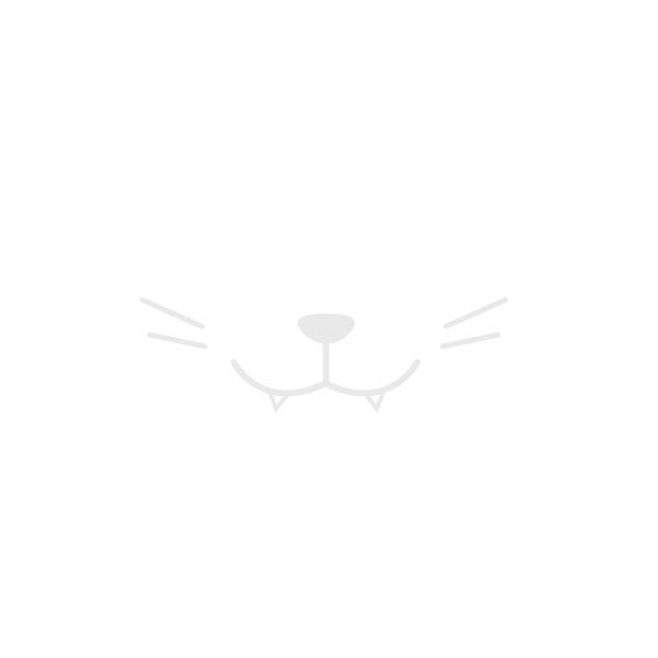 Bügelbild Katzen Smiley